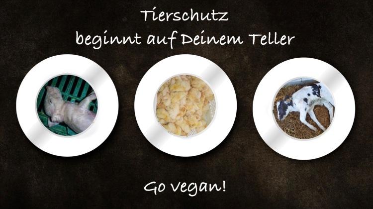 Teller-Tiere (1)